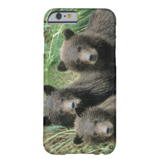 Three Grizzly Bear Cubs or Coys Cub of the iPhone 6 Case