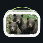 """Three Grizzly Bear Cubs or Coys (Cub of the Lunch Box<br><div class=""""desc"""">COPYRIGHT Alice Garland / DanitaDelimont.com   US02 AGA0003.jpg   Three Grizzly Bear Cubs or Coys (Cub of the Year) Sitting on a Grassy Slope,  U.S.A,  Alaska,  Katmai,  Peninsula</div>"""
