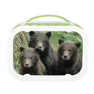 Three Grizzly Bear Cubs Or Coys (cub Of The Lunch Box at Zazzle