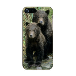 Three Grizzly Bear Cubs or Coys (Cub of the Metallic Phone Case For iPhone SE/5/5s