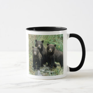 Three Grizzly Bear Cubs or Coys (Cub of the Mug