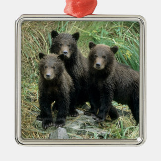 Three Grizzly Bear Cubs or Coys (Cub of the Square Metal Christmas Ornament