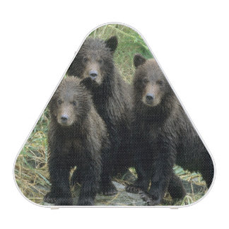 Three Grizzly Bear Cubs or Coys (Cub of the Speaker