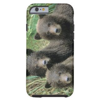Three Grizzly Bear Cubs or Coys (Cub of the Tough iPhone 6 Case