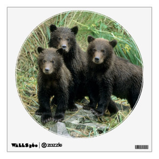 Three Grizzly Bear Cubs or Coys (Cub of the Wall Sticker