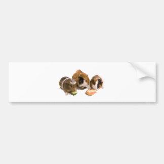 three guinea pigs who eat, bumper sticker