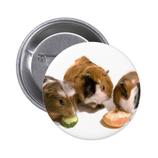 three guinea pigs who eat, pinback button
