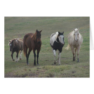 Three Horses and a Pony Greeting Cards