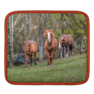 Three Horses Chestnut and Duns Equine Photo iPad Sleeves