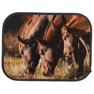 Three horses drinking in dusky light car floor mat