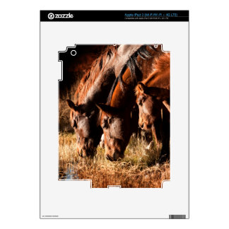Three horses drinking in dusky light decals for iPad 3