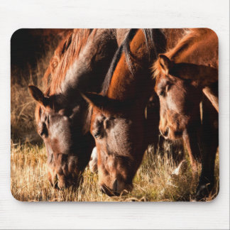 Three horses drinking in dusky light mouse pad