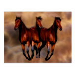 Three horses in one postcard