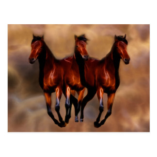 Three horses in one postcards