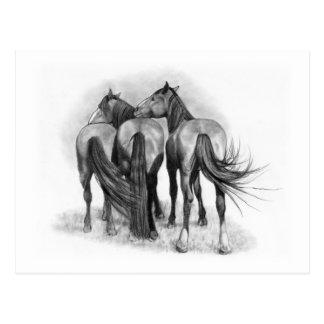 Three Horses: Rear Ends: Affection: Pencil Art Postcard