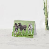 Three Icelandic colts. Card