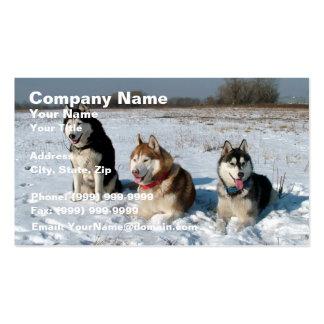 Three Interesting Malamute Dogs Business Card
