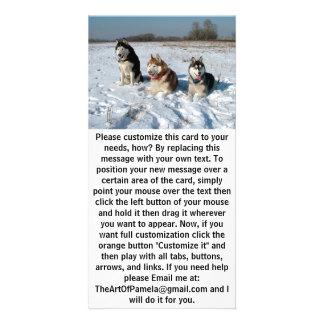 Three Interesting Malamute Dogs Card