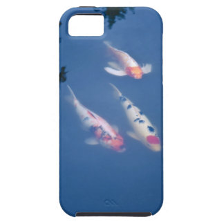 Three Japanese koi fish in pond iPhone SE/5/5s Case