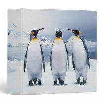 Three King Penguins 3 Ring Binder