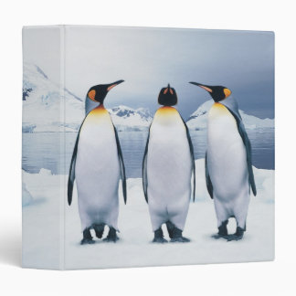 Three King Penguins 3 Ring Binder