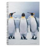 Three King Penguins Notebook