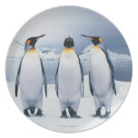 Three King Penguins Plate