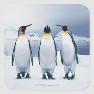 Three King Penguins Square Sticker