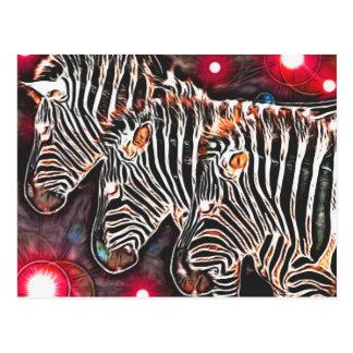 *Three Kings* Wild Zebra Trio Design Post Card