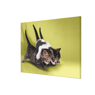 Three kittens hugging each other canvas print