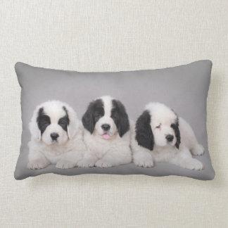 Three Landseer puppies Throw Pillow