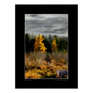 Three Larch Two Moose Poster