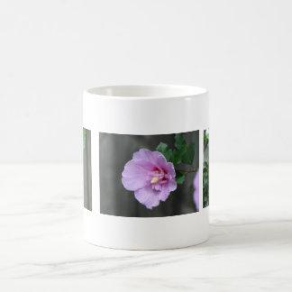 Three Lavender Chiffon Hibiscuc Flowers Coffee Mug