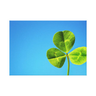 three leaved clover canvas print