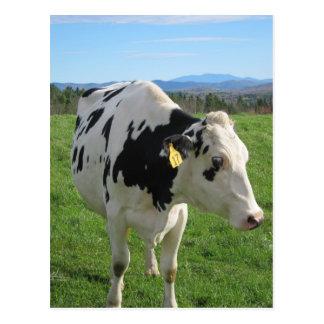Three Legged Cow Postcard