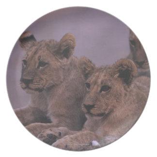 Three Lion Cubs Melamine Plate