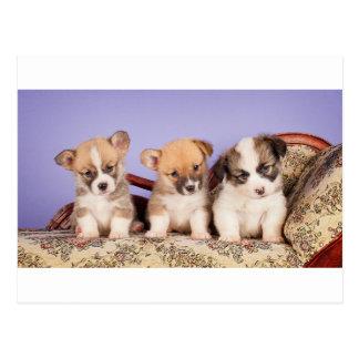 Three little cutie pies post card