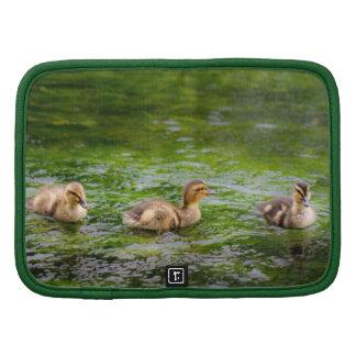 Three Little Ducklings Ducks Folio Planners