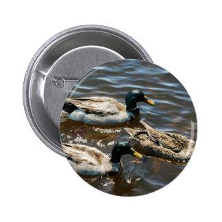 Three Little Ducks Pinback Button