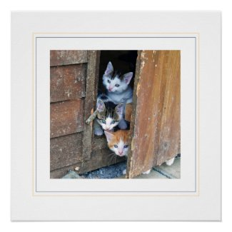 Three Little Kittens Photographic Glossy Poster