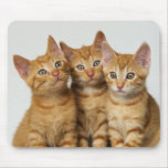 Three little kittens, red tabby, side by side mousepads