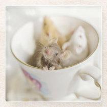 Three Little Mice Glass Coaster