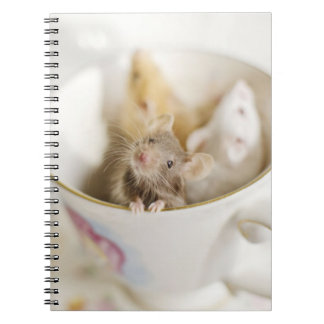 Three little mice siting in cup notebook