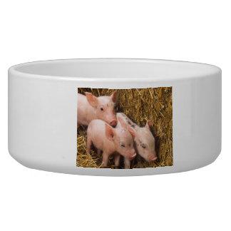 Three Little Pigs Bowl