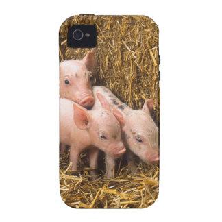Three Little Pigs iPhone 4/4S Case