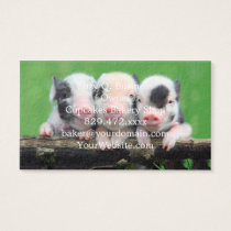 Three little pigs - cute pig - three pigs business card