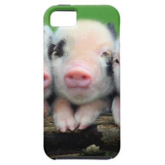 Three little pigs - cute pig - three pigs iPhone SE/5/5s case