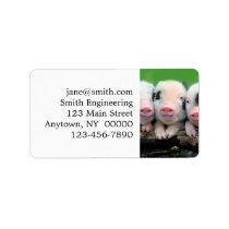 Three little pigs - cute pig - three pigs label