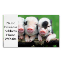Three little pigs - cute pig - three pigs magnetic business card