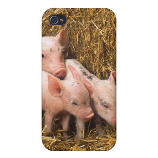 Three Little Pigs iPhone 4 Cover